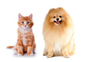 bigstock-Cat-And-Dog-Red-Color-6191170