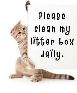 clean litter