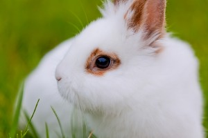 White cute rabbit on green background